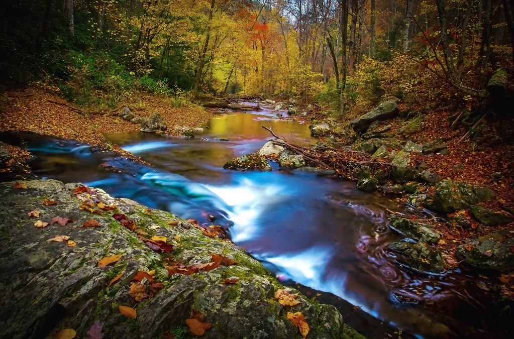 great smoky mountains national park creek during the fall